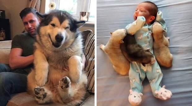 20 забавных фото животных, которые заставят вас улыбнуться от всей души