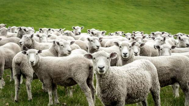 Закон озащите чувств скота собираются принять вВеликобритании: Новости ➕1, 12.05.2021
