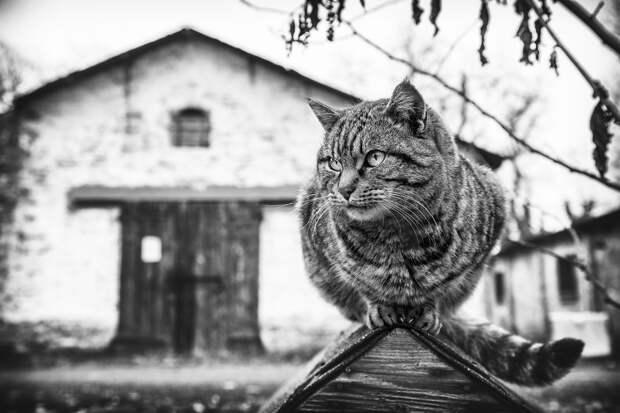 monorail_cats_photos_sabrina_boem_04.jpg