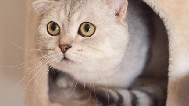 Ученые из США и Австралии указали на необычную любовь кошек к воображаемым коробкам