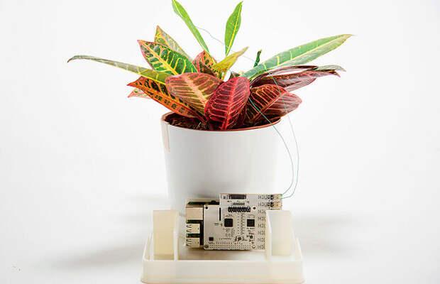 Растения умеют слышать, общаться и кричать — как им это удаётся?
