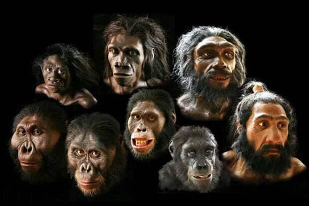 Большинство теорий о происхождении человека несовместимы с известными окаменелостями