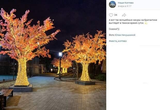 Фото дня: ночные сакуры в «Бригантине»