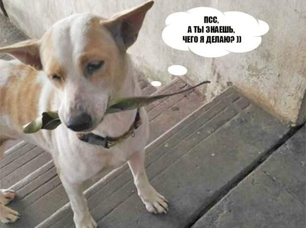 Кому носит подарки самая милая и нежная бездомная собака?