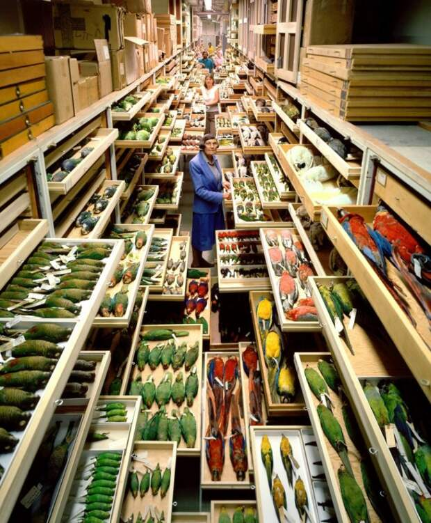 Секретные коллекции Американского музея естественной истории