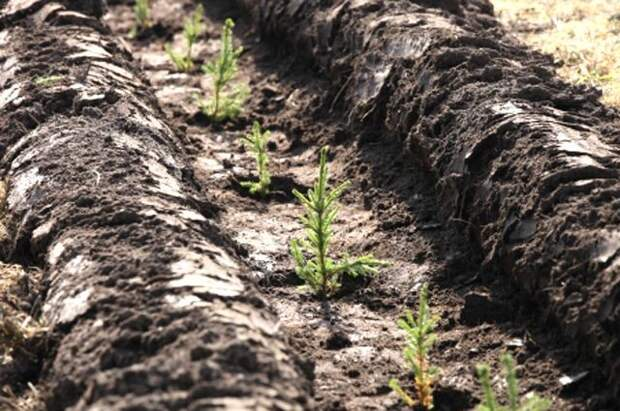 В Удмуртии начались работы по восстановлению лесов