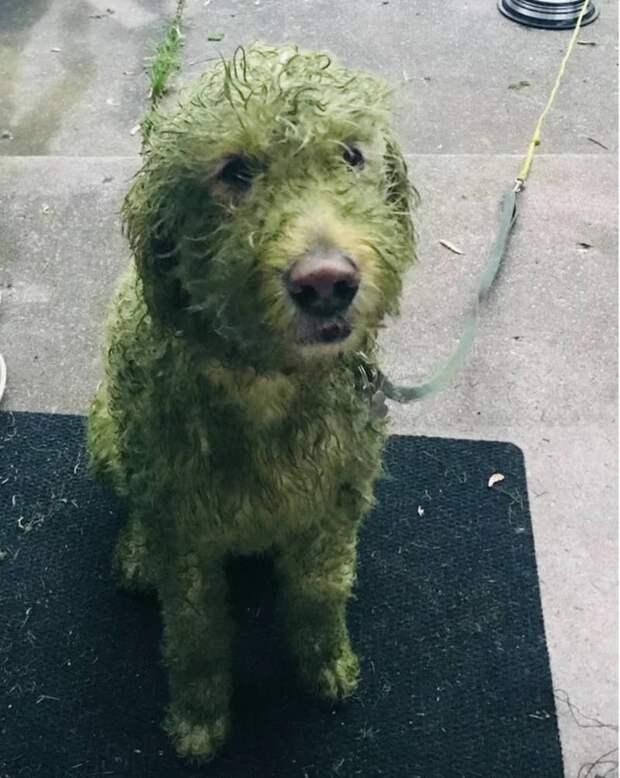Не пускайте пса бегать по свежескошенной траве