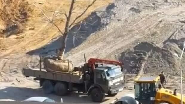 Красноярцы спасли редкое дерево от топора застройщиков