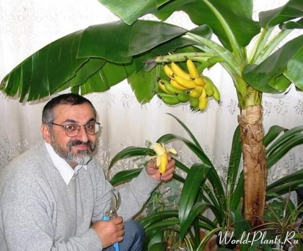 Банановые джунгли в… квартире!