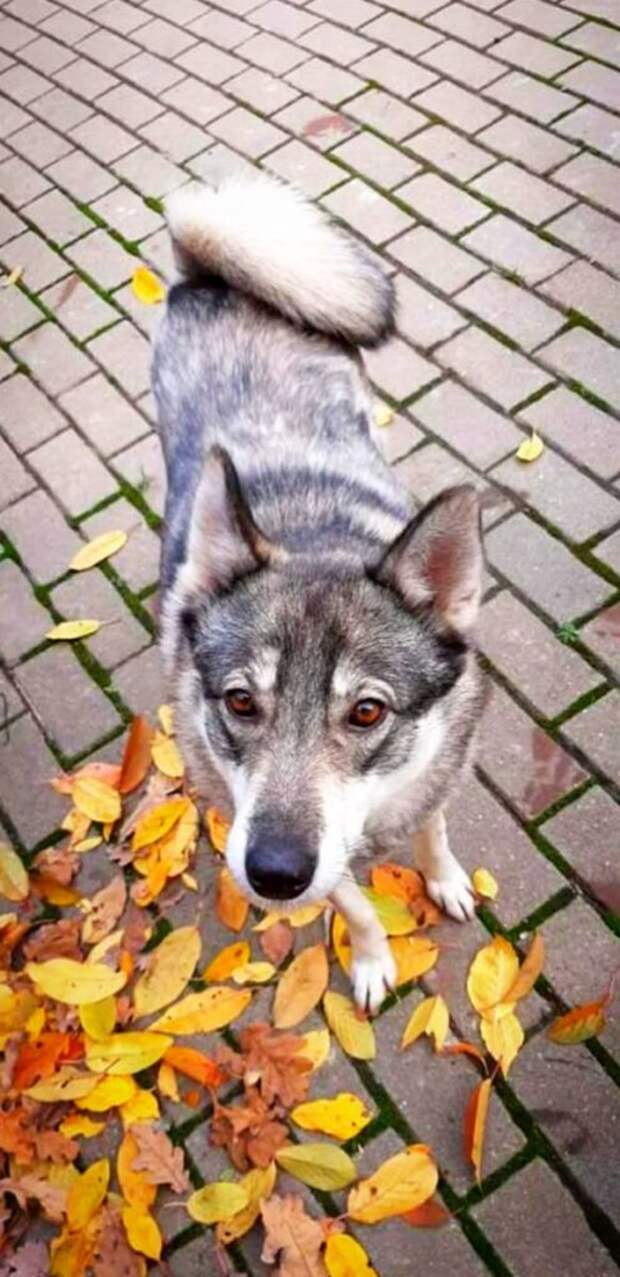 Собака от сильного холода и страха зарылась в кучу листьев