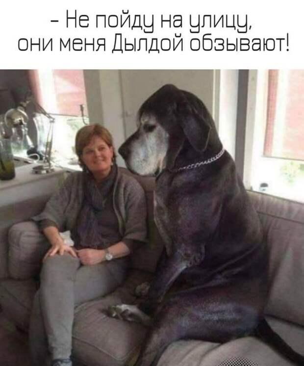 На изображении может находиться: 1 человек, собака, текст «-не пойду на улицу, они меня дылдой обзывают!»