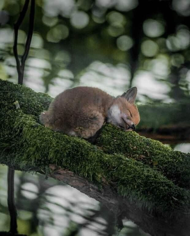 10 восхитительных фото природы, которые способны удивить