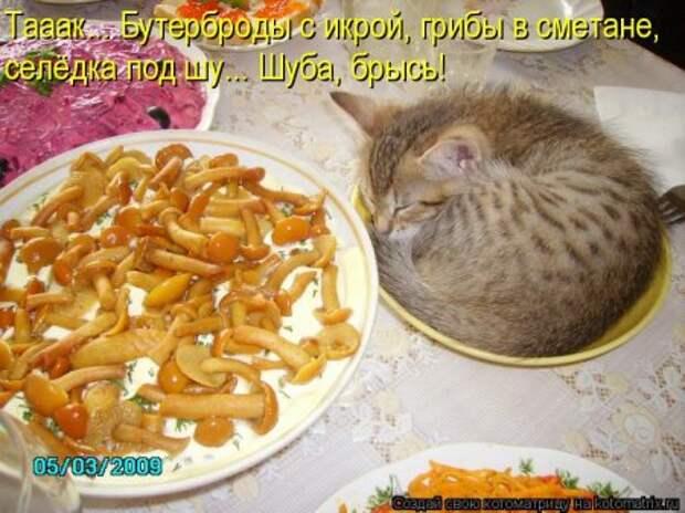 1451492488_kotomatritsa_m