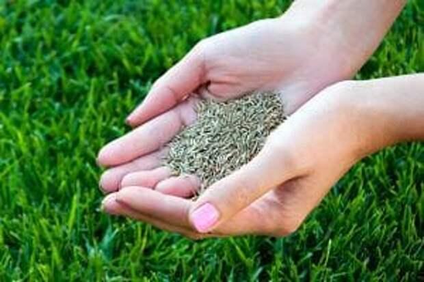 Как посеять газонную траву своими руками? Метод английских садоводов для получения красивого газона
