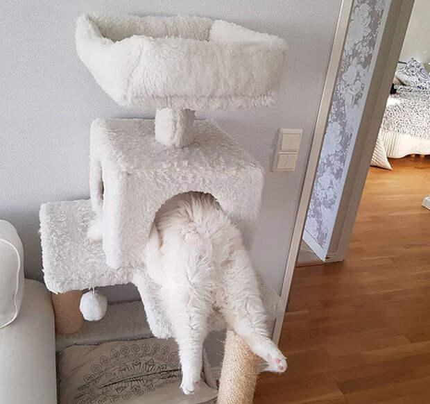 10+ забавных кошек, которые спят в самых невероятных местах и позах