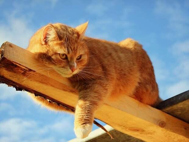 Не стали рассказывать дочери о смерти любимого кота: обман раскрыли только через 20 лет Ложь, боль, дети, кот, обман