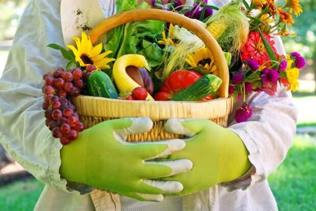 Горячий сентябрь: 7 обязательных садовых работ
