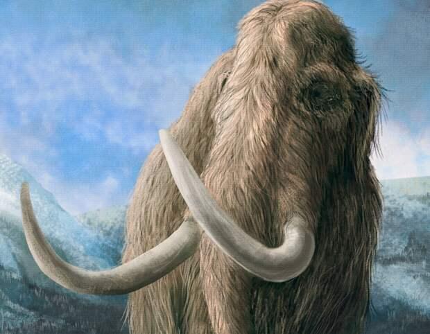 Палеогенетики выделили ДНК из зубов трех мамонтов возрастом более 1 миллиона лет