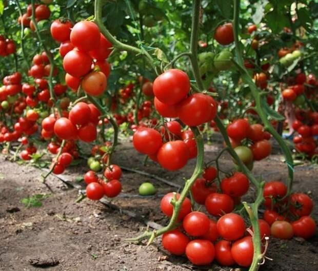 Как получить урожай, которым можно удивить всех?