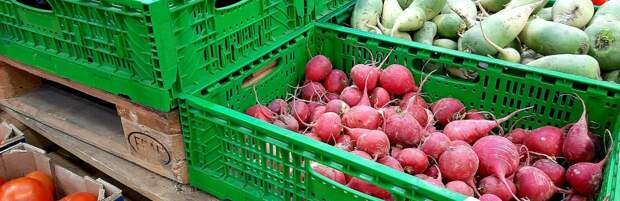 Ожидается ли рост цен на овощи в Алматы в межсезонье, рассказали в акимате