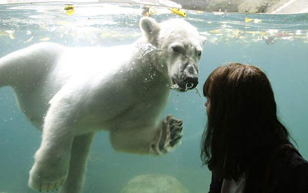 Животные в новостях