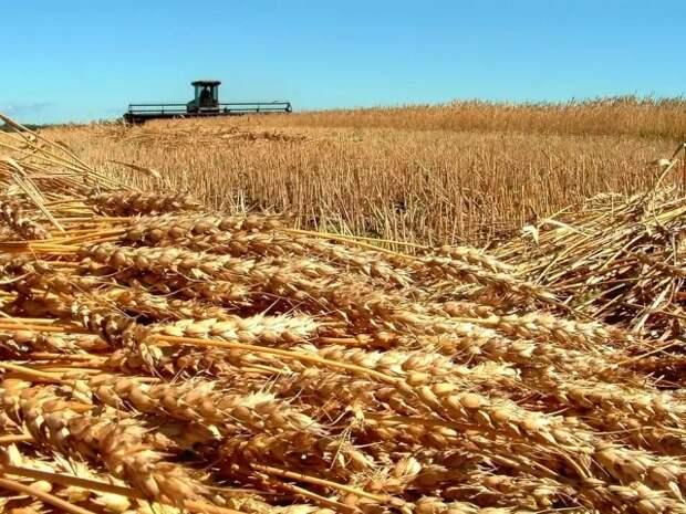 ГМО-скандал в Поволжье: агрохолдингом заинтересовалась ФСБ?