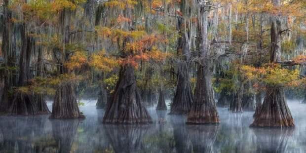 Жуткие деревья отражаются в болотных водах южных штатов США. Фотограф: Дэвид Томпсон.