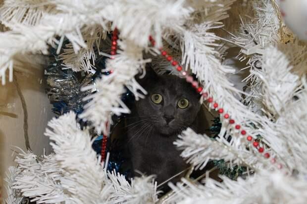Жителей Удмуртии предупредили о новогодних опасностях для домашних животных