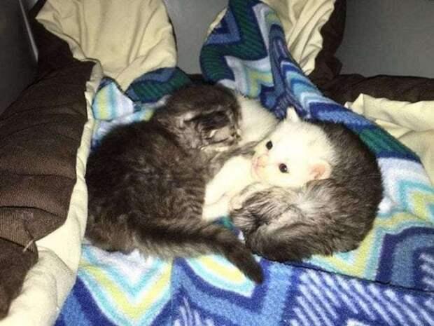 Два маленьких котенка как могли согревали свою больную сестру, но вскоре у них появилась необычная мама
