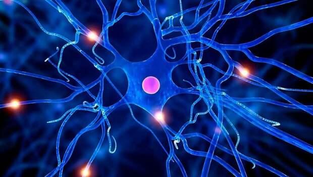 Американские ученые научились понимать язык клеток