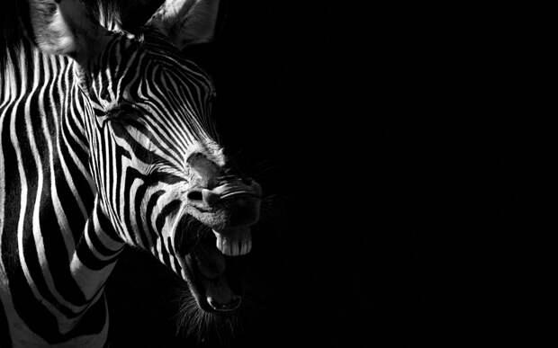Красивые портреты животных от Boza Ivanovic