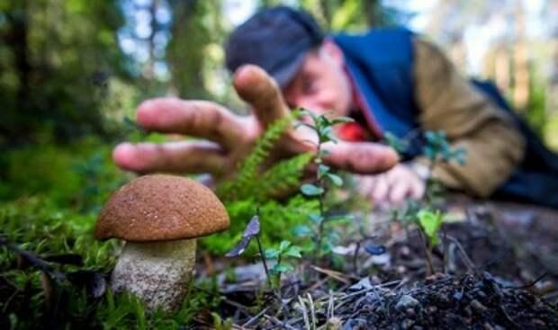 В России скоро начнут контролировать сбор ягод и грибов по инициативе чиновников