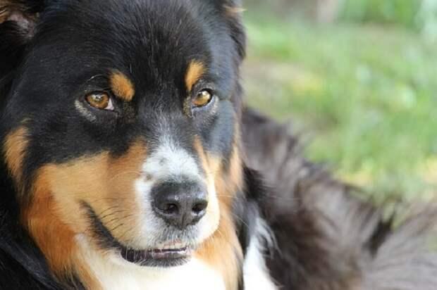 Ученые выяснили каким образом собаки распознают «плохих» людей