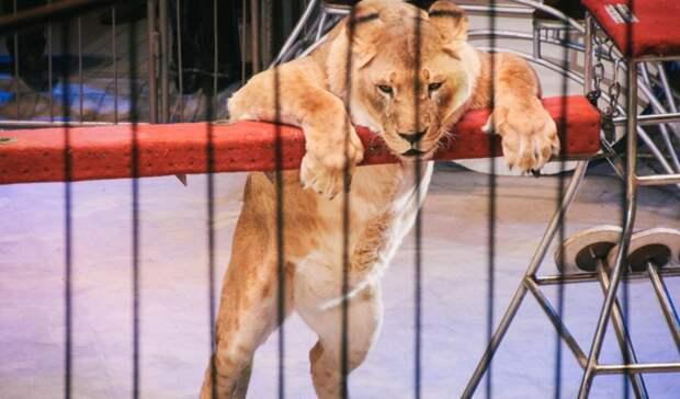 Молодая тюменка возглавила Иркутский цирк