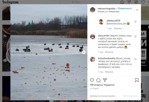 Фото дня: вредное для уток Черное озеро