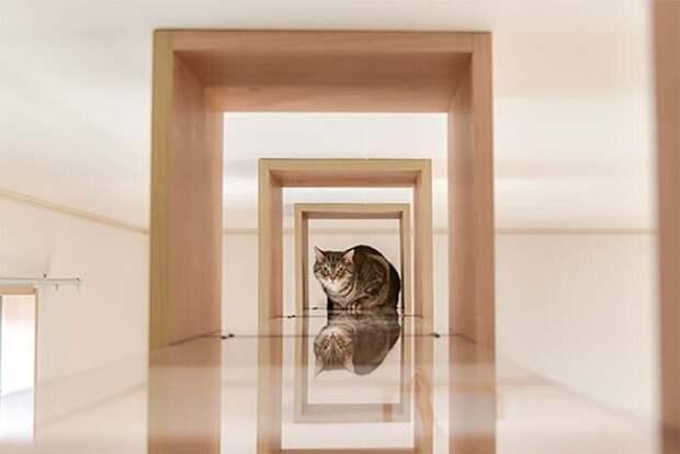7 фото идеального дома для одиноких кошатников