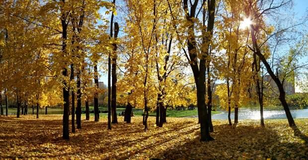 Россиянам пообещали аномально тёплую погоду в сентябре