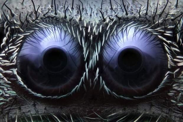 Мир который нельзя увидеть невооруженным глазом (20 фото)