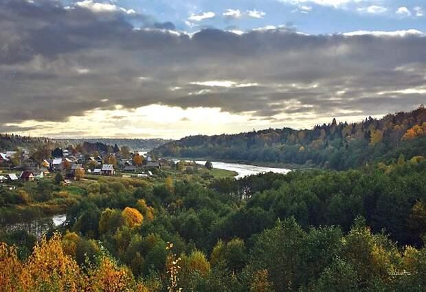 Картинки по запросу Маловишерский лес в Новгородской области