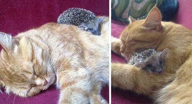 необычная дружба, невероятная дружба животных, животные спят