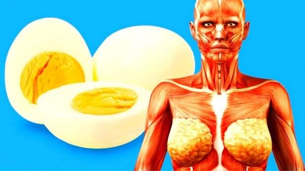 яичный белок для похудения