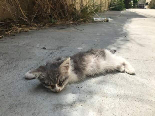 Девушка нашла на улице почти ослепшего котенка и изменила его жизнь