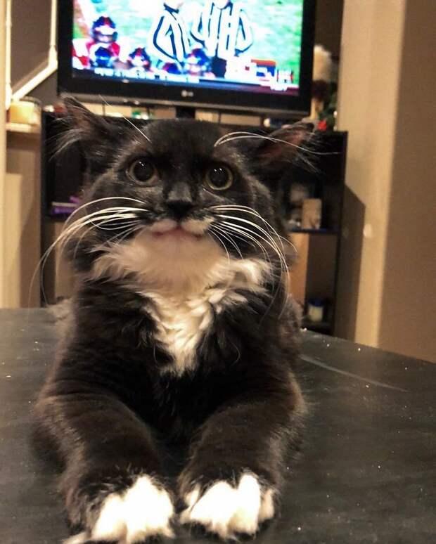 Улыбающаяся кошка спаслась от смерти и влюбила в себя соцсети