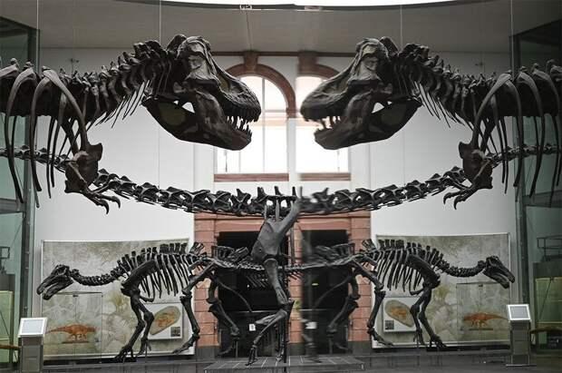 Ученые выяснили размеры популяции тираннозавров