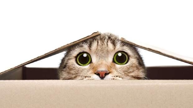 Эксперты предупредили об опасности домашних кошек
