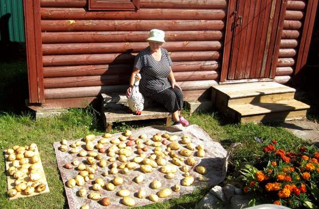 Они радуются любым мелочам- даже вот такому урожаю картошки! Фото из личного архива автора.