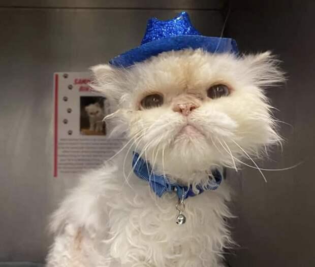 Кот-долгожитель отметил 19-летие: выглядит неплохо