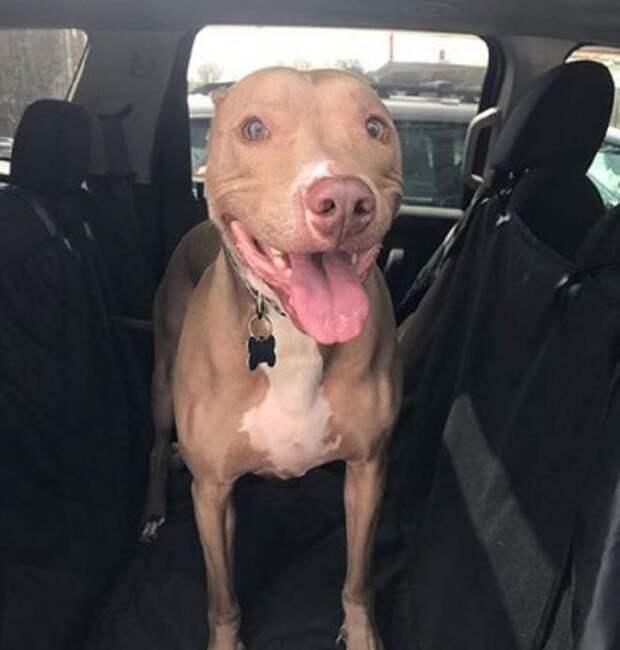 Пес в машине