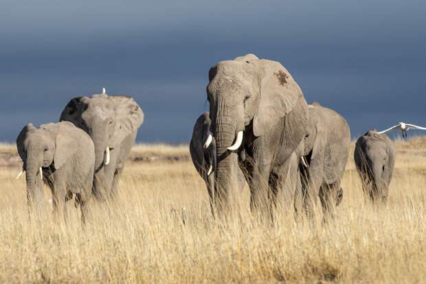 Учёные предупредили о беспрецедентном сокращении популяции диких животных