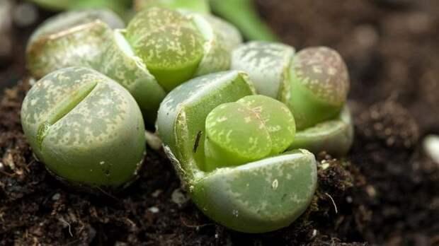 Живучие растения